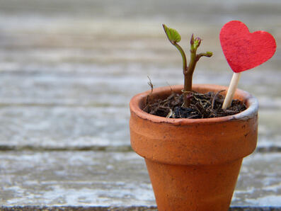 Heart and seedling in flower pot